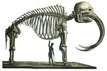 Как можно собрать скелет мастодонта бивнями вниз? Полёт фантазии плюс обычный напильник — и дело в шляпе!