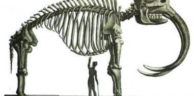 Доисторические животные, которых не было 3