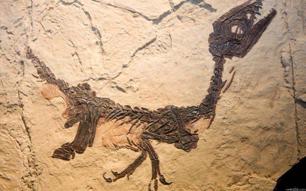 В начале XIX века стало ясно, что ископаемые кости располагаются в разных слоях, а значит, допотопные звери погибли не в один миг. Из-за этого учёные насчитали целых двадцать семь Всемирных потопов!