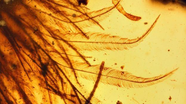В янтаре обнаружили хвост пернатого миниатюрного динозавра