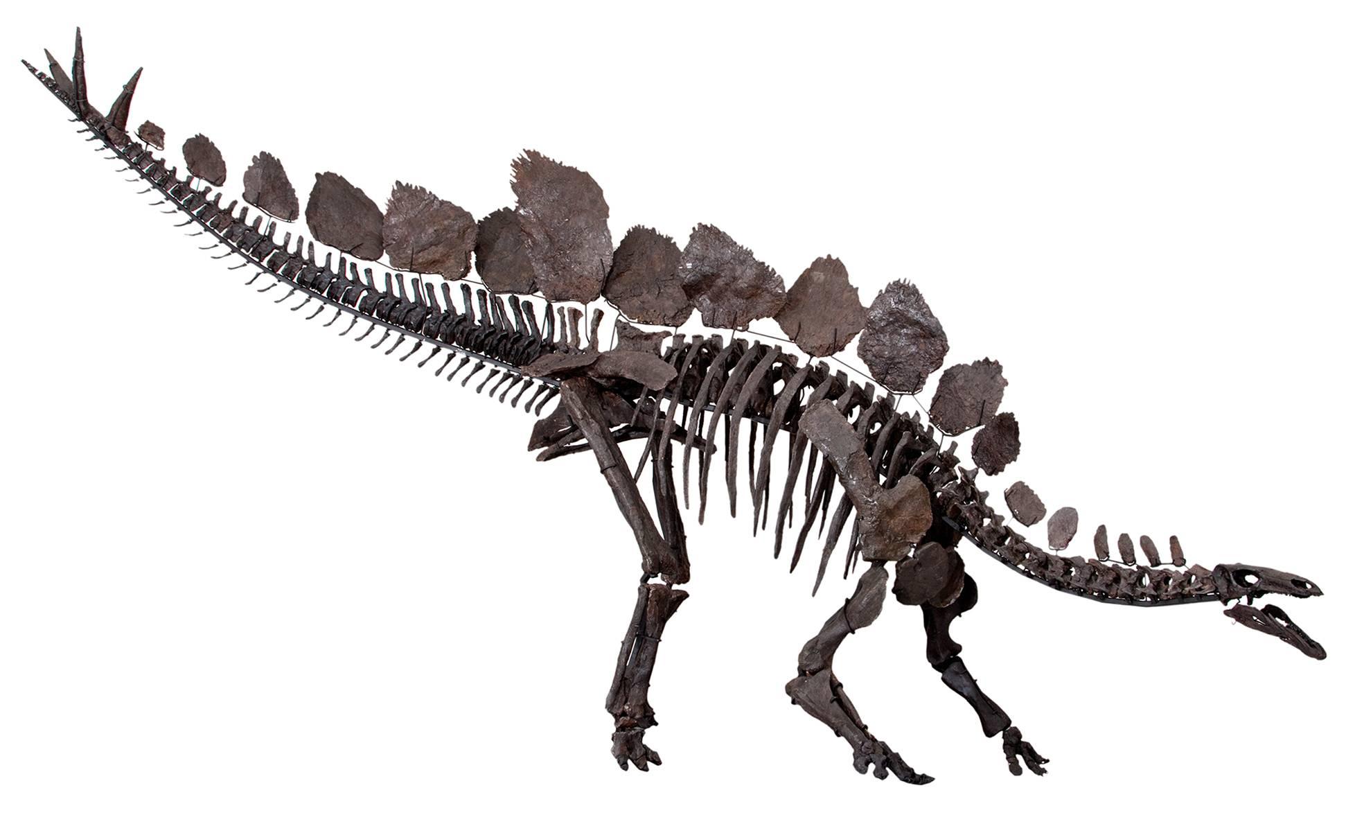 Если бы динозавры не вымерли 18