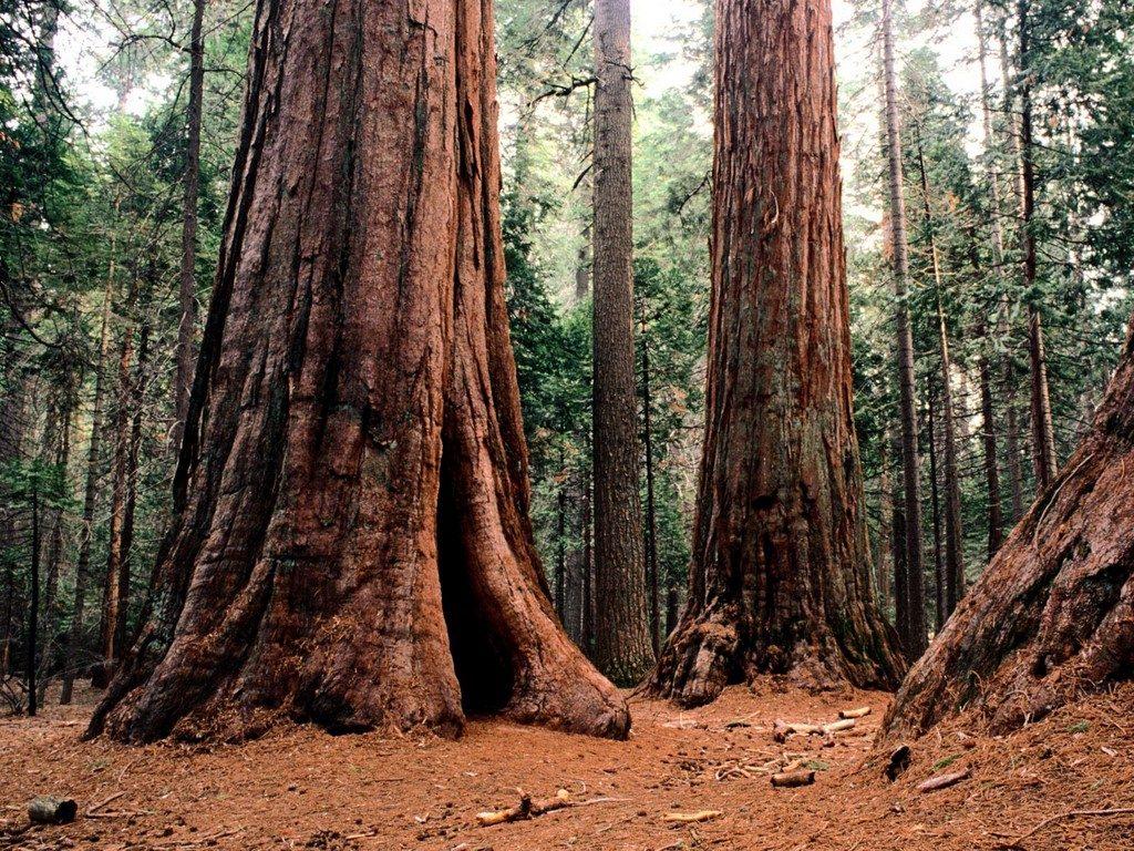 Если бы существовали гигантские животные и растения 4