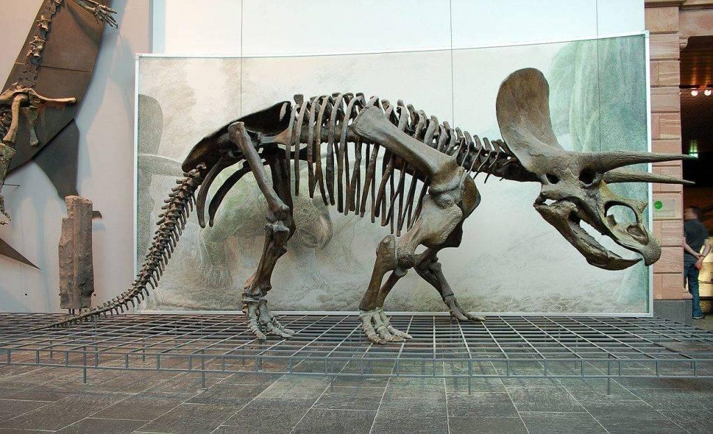 Почему вымерли динозавры? 12