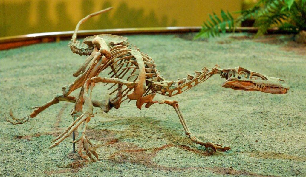 Почему вымерли динозавры? 13