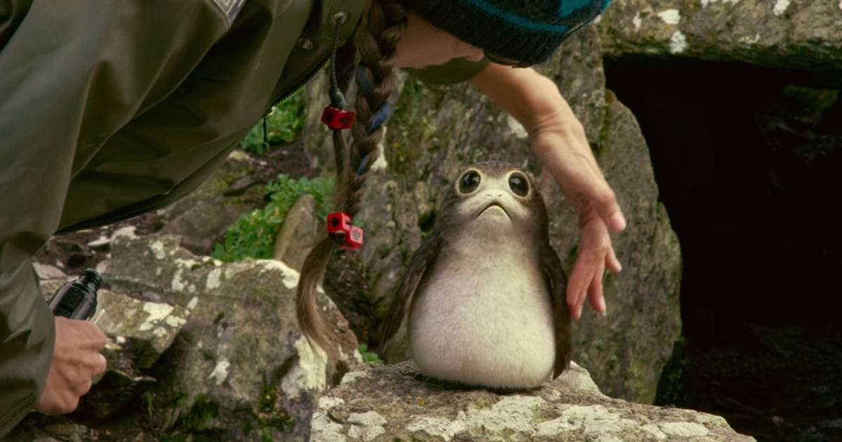 Откуда в «Последних джедаях» взялись птицы порги?