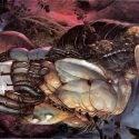 Ходоверсум: жестокая и бесстыдная вселенная Ходоровски