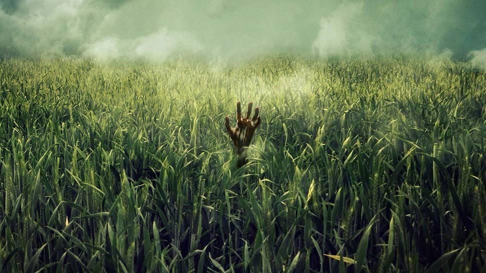 Netflix экранизирует повесть Стивена Кинга и Джо Хилла «Высокая зелёная трава»