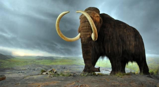 Учёные «пробудили» клетки замороженной туши мамонта возрастом 28 тысяч лет