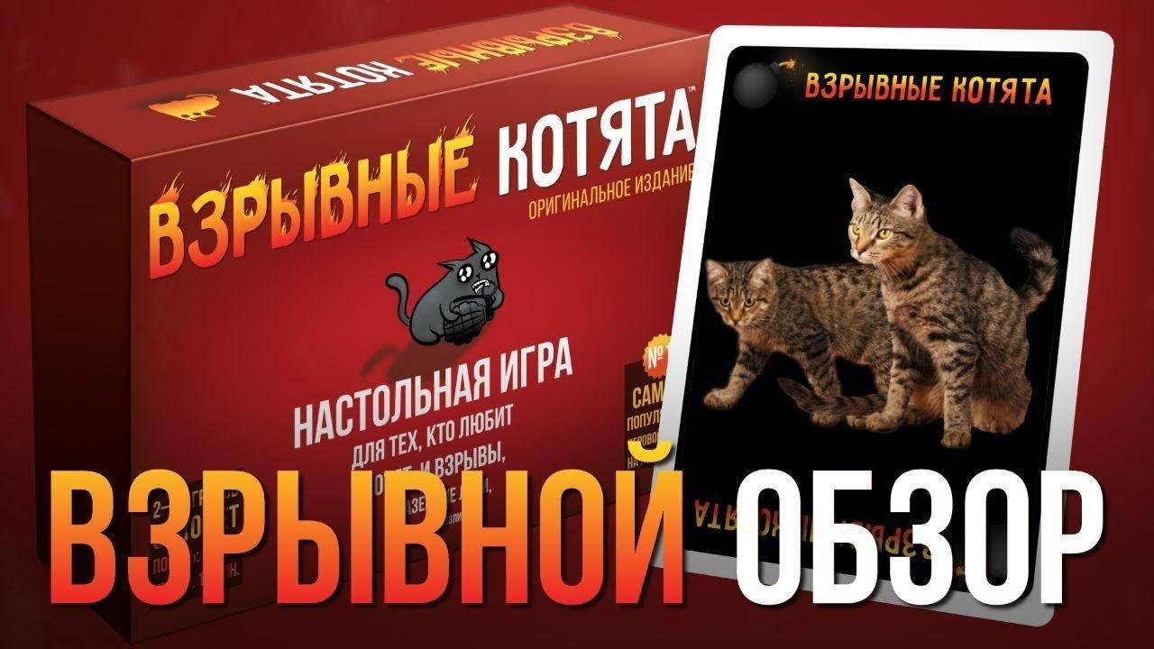 Видео: обзор настольной игры «Взрывные котята» — в гостях обычные котята!