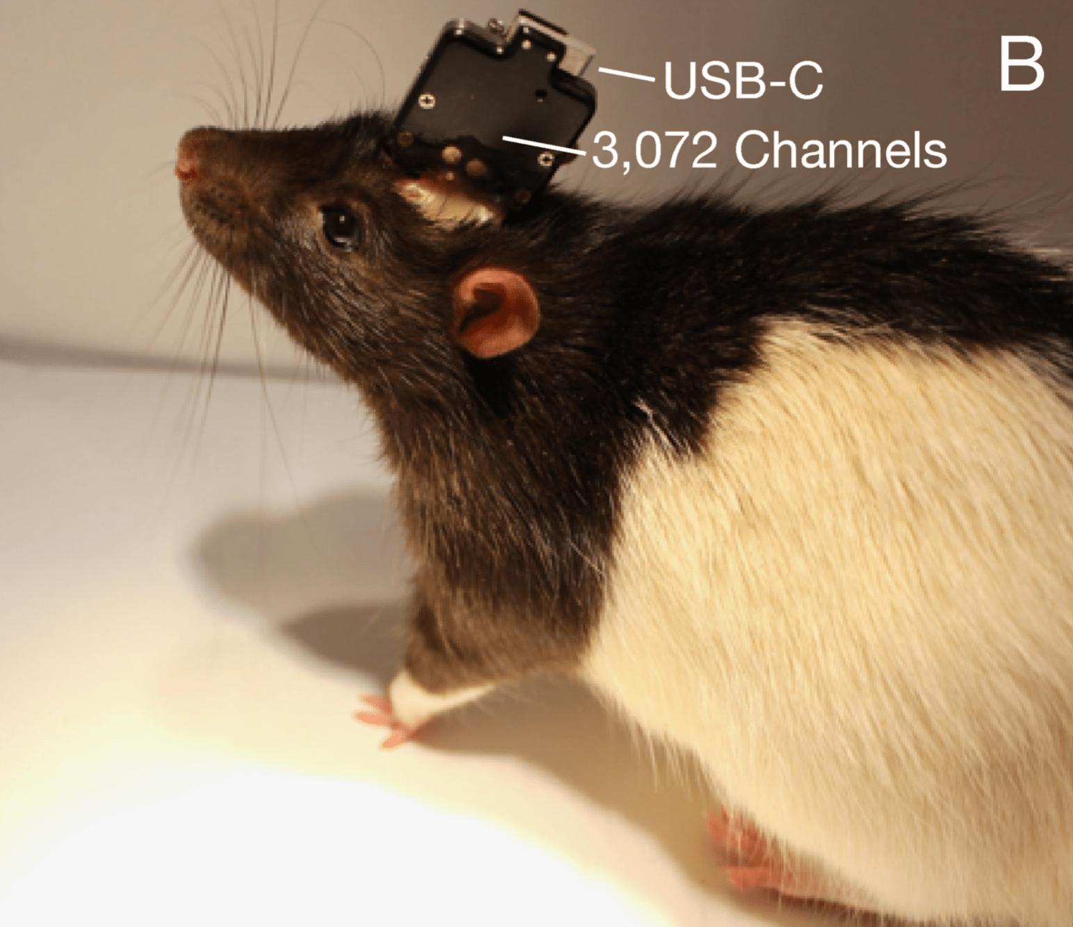 Илон Маск представил свой нейроинтерфейс на основе встроенных в мозг «нитей» 5
