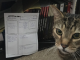 Фан: ветеринар создал больному котёнку персонажа по D&D