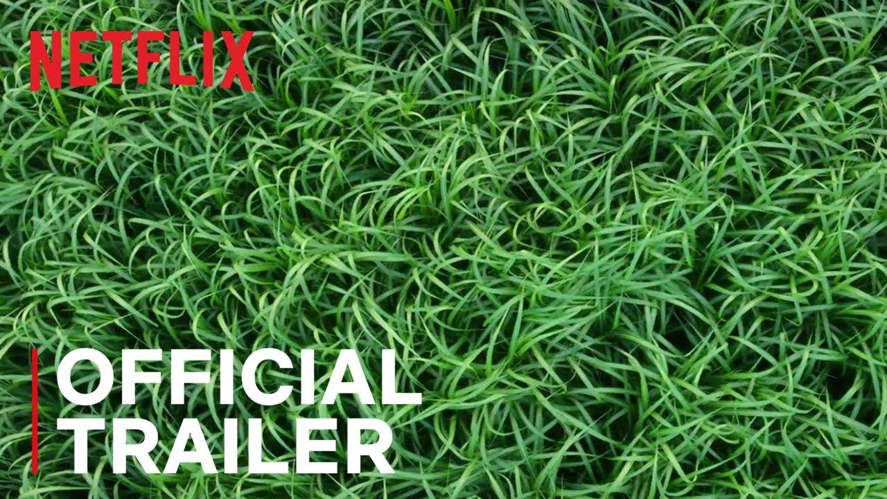 Первый трейлер триллера «Высокая зелёная трава» по повести Стивена Кинга и Джо Хилла