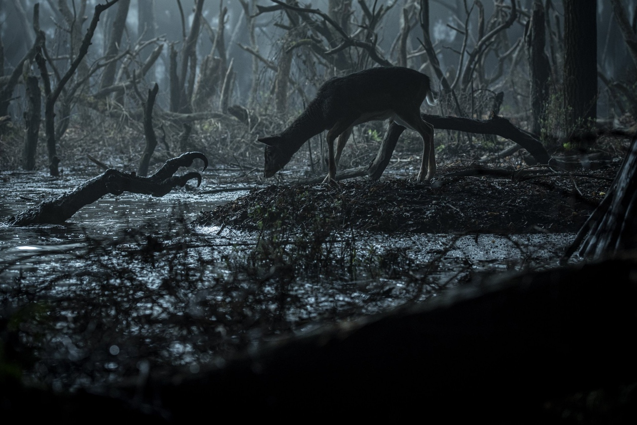 Netflix продлил «Ведьмака»на второй сезон —за полтора месяца до выхода первого 6