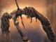 Что почитать: французская фантастика Жаворски, драконы Уолтона и фэнтези-постапокалипсис Роанхорс