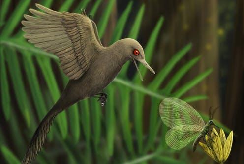 Вянтаре сохранились останки динозавра размером сколибри— это самый маленький динозавр извсех, что известны учёным