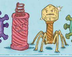 «Вирусы бывают разные»: отрывок изнаучного комикса «Микробы и вирусы» 12