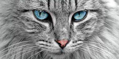 Андрей Крас «Все началось скотика»