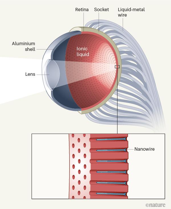 Китайские учёные создали искусственный глаз, сопоставимый похарактеристикам счеловеческим 1