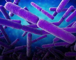 На МКС обнаружили неизвестные микробы 1