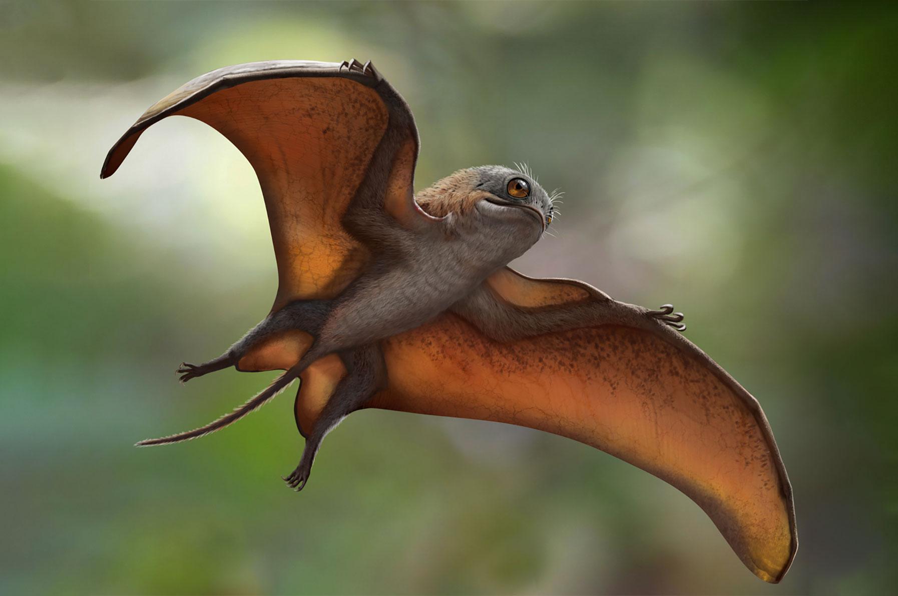 Новый вид птерозавров сравнили спокемонами и поргами из«Звёздных войн»