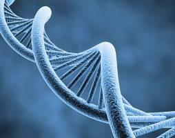 Химерные эмбрионы человека и обезьяны прожили 20 дней